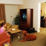 homewood suites - pet friendly - golf packages pinehurst